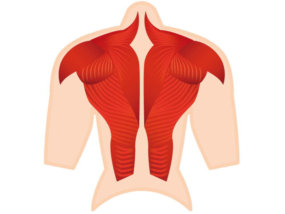 肩甲骨と筋肉